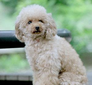 ぱるか限定特典喜んでいただきました!森田誠さんの犬しつけ法