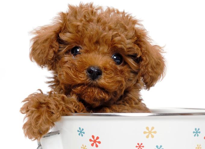 藤井聡さんと森田誠さんの犬しつけ法を比較してみた!