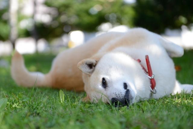愛犬を健やかな眠りに導く!森田誠の愛犬と豊かに暮らすためのしつけ法