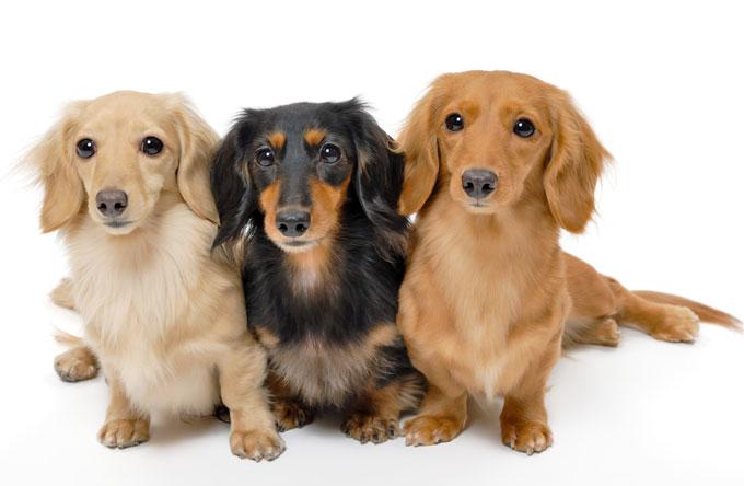 森田誠の犬のしつけ法について、当ブログ宛にいただいた質問をUPします