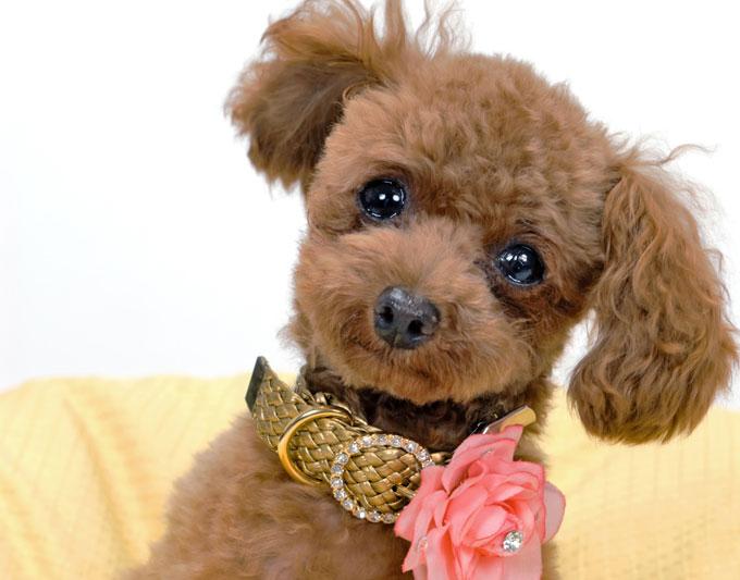 遠藤和博さん、山本卓さん、森田誠さんの犬しつけDVD比較表作りました!