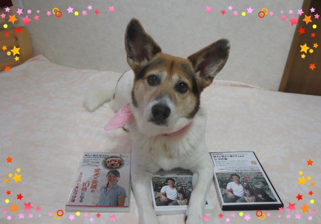 森田誠さんと二村有香さんの犬しつけ比較してみる!