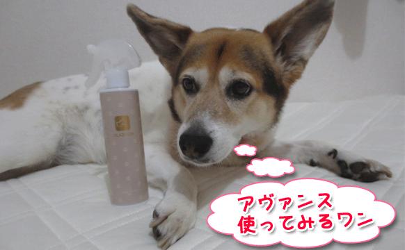 犬用化粧水アヴァンス(AVANCE)