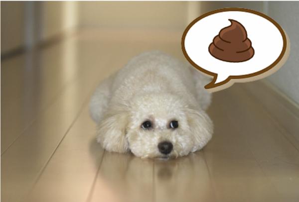 ウンチに執着のある犬