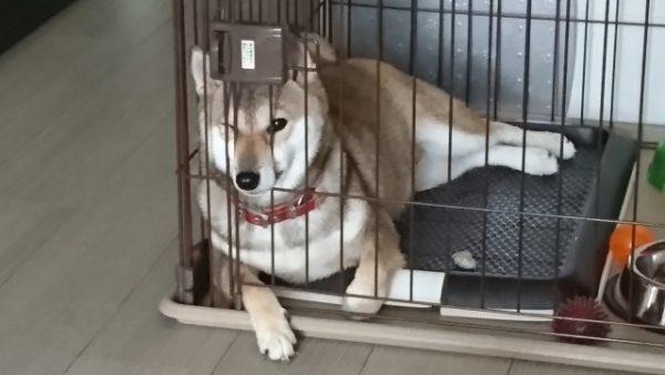 犬の食糞原因